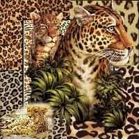 She's a Cheetah