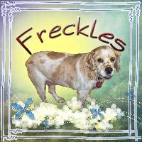 Freckles - SBF pets