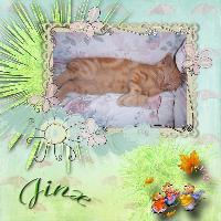 kitty jinx