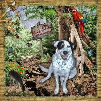 PJ's Jungle Adventure