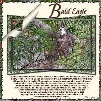 ~ Bald Eagle Nesting ~