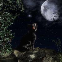 Black cat looking at full moon