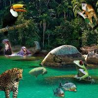 Brazil - rainforest animals
