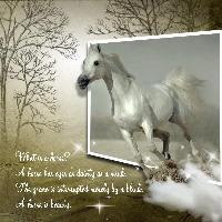 What is a Horse..........