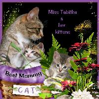 Miss Tabitha and her Kittens