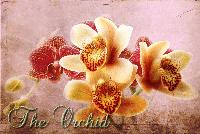 The Mighty Orchid