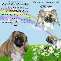 In Bella's Memory