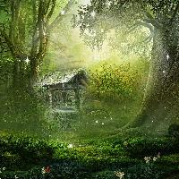 where fairies live - forest/woods