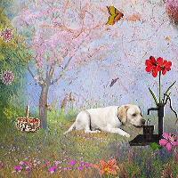 cooper in a flower garden