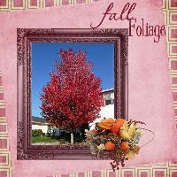autumn tree in bloom
