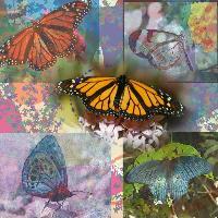 My beloved butterflies