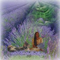 The healing spirit of Lavender