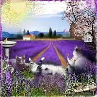 Cats in Lavender
