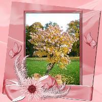 Lilac Hydrangea in bloom