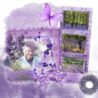 My lavender mum