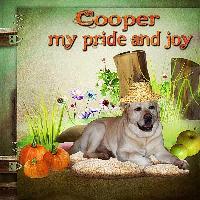 Cooper... my pride and joy