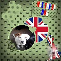 MAX THE UK DOG