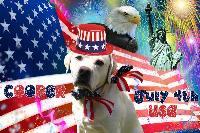 patriotic pooch_USA