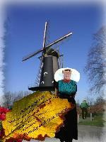 Mozzie in Holland