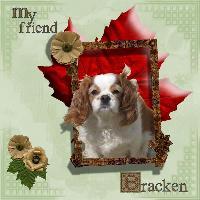 My friend Bracken