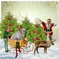 coopers christmas wonderland