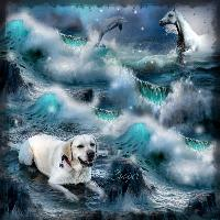 Coopers stormy seas