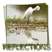 ~ Reflection ~