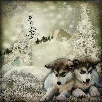 Winter Wolf Pups