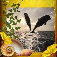 Dolphin Dreamscape
