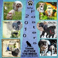 2010 in review - my foster dogs