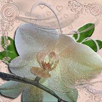 Redo Orchid Embossing