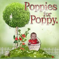 Poppies for poppy