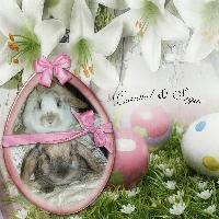 My Bunnys