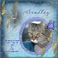 *** BRADLEY ***
