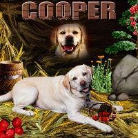 Alphabet Soup C_cooper