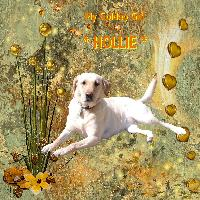 ** H is for HOLLIE **