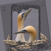 The Gannet