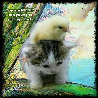 pick up chicks