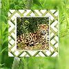 Jungle Animal