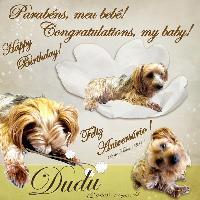 Feliz Aniversário, Dudu! Happy Birthday, Dudu!