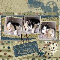 K is for Kittens