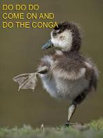 Do The Conga