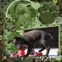 Little Puppy Beau