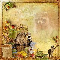 Racoons.....2