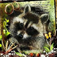 Racoons....3