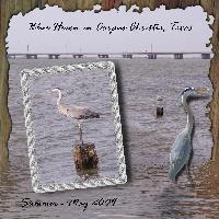 Bird I Saw - Blue Heron