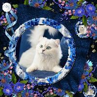 Pretty puss