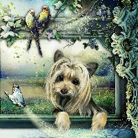 A day in the life of a yorkie