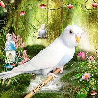 Krystal the Parrot