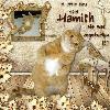 Daft Hamish